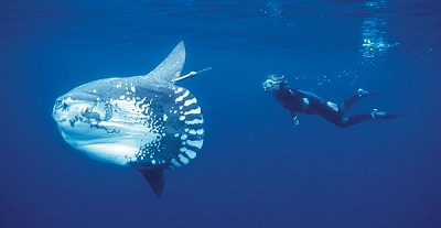 Самая большая рыба в мире