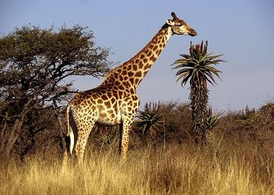 Самое большое животное в мире