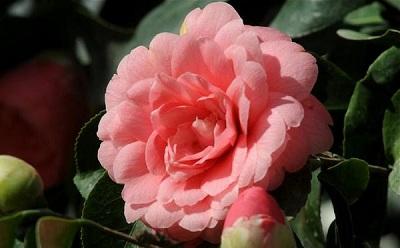 Самый редкий цветок в мире