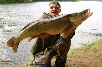 Самый большой судак в мире