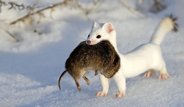 Самое красивое животное