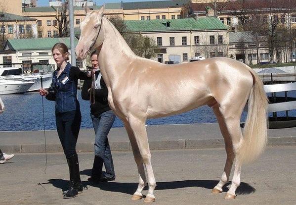 Самый дорогие лошади мира