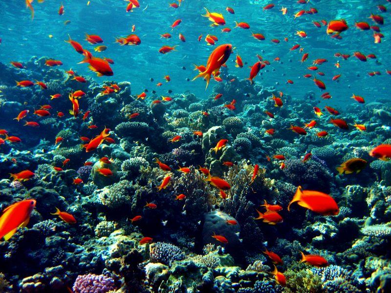 Самое глубокое море в мире