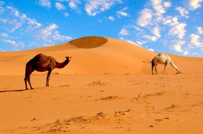 Самая большая пустыня на земле
